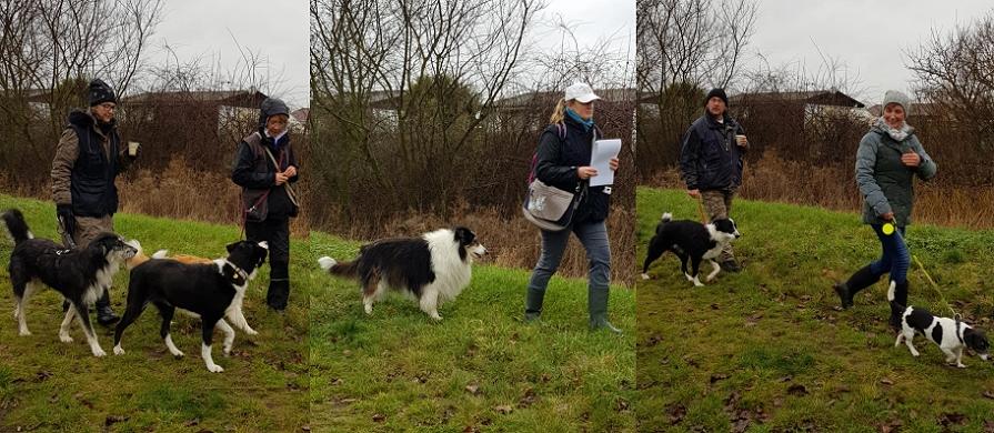 Spaziergang um das Tierheim