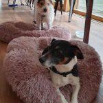 Cooper und Milo