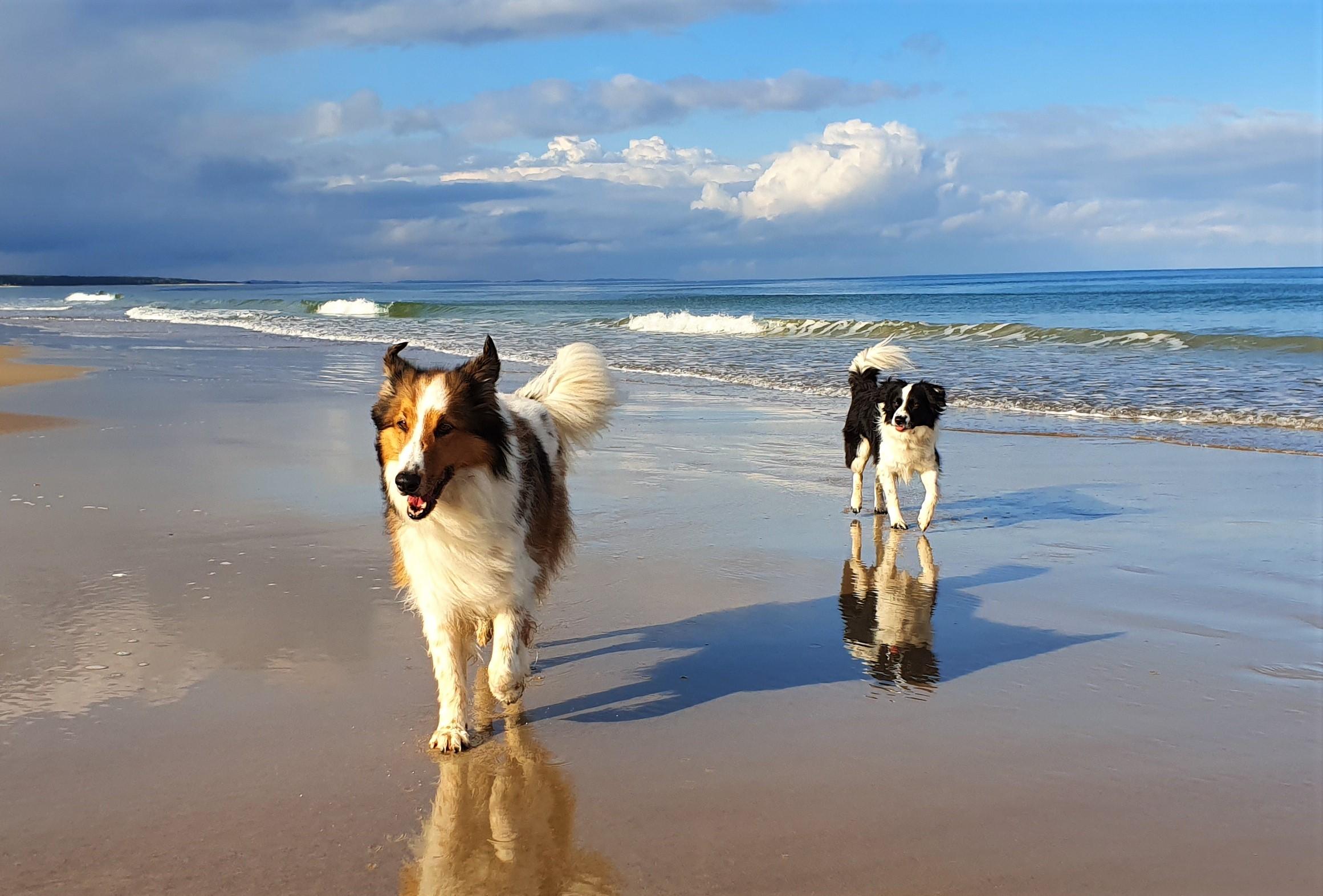 Arno und Eddi am Meer